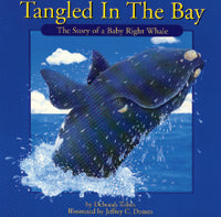 Tangled in the Bay