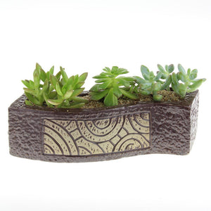 Long brown ceramic planter pot with succulent plants