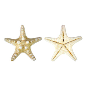 "Natural Knobby Starfish 2""- 3"""