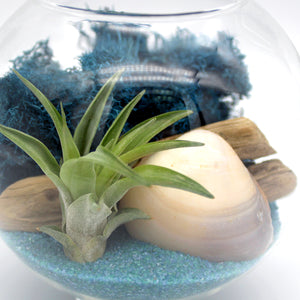 DIY Orb Glass Vase Terrarium with Air Plant