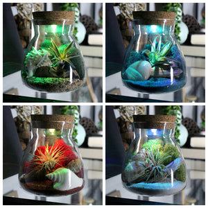 Color Changing Live Air Plant LED Terrarium Kit