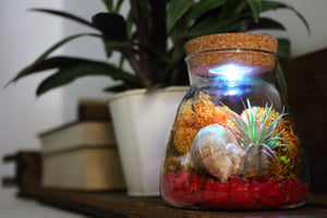 Glass Terrarium with LED Light & Cork Lid