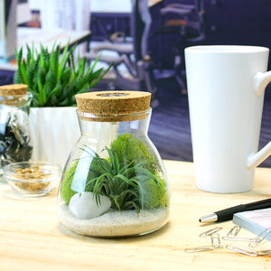 White Sand LED Air Plant Terrarium Kit