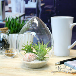 Glass Teardrop Terrarium Kit with 3 Live Air Plants