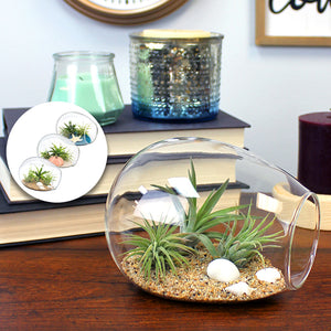 Glass Oval Terrarium Kit with 3 Live Air Plants