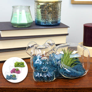 Glass Dog Air Plant Terrarium Kit