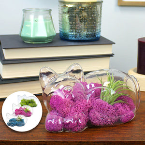 Glass Cat Air Plant Terrarium Kit