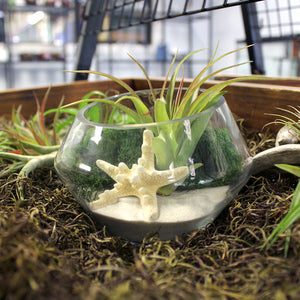 White Sand Jumbo Air Plant Terrarium Kit