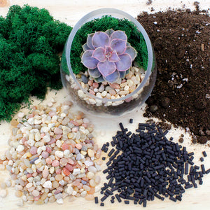 Terrarium Essentials Kit - Everything You Need For Your Terrarium!