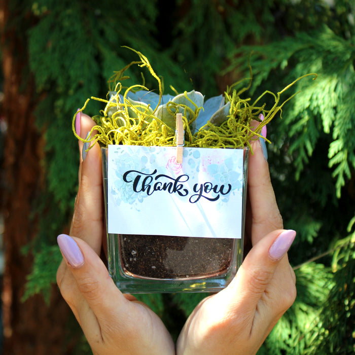 "2.25"" Succulent In Cube Glass Pot - Wedding Favors, Personal Cards"