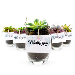 "2.25"" Succulent In Oval Tapered Glass Pot - Wedding Favors, Personal Cards"