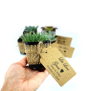Succulent Wedding Party Favor With Burlap And Personal Card - Mixed Varieties - Bundle of 50, 100