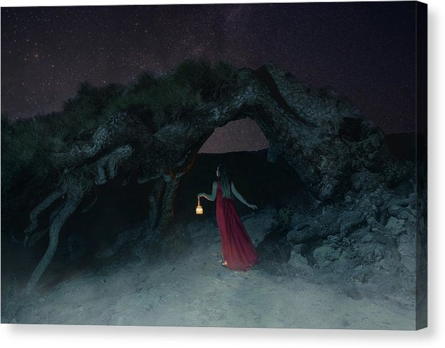 Young woman in the red dress with lantern found the mysterious tree