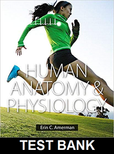 Test Bank for Human anatomy & physiology 1st edition Erin C. Amerman