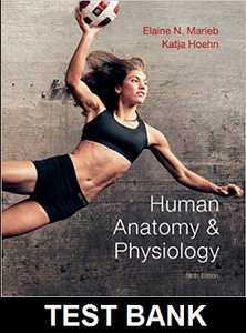Test Bank for Human Anatomy and Physiology 9th Edition Marieb Hoehn