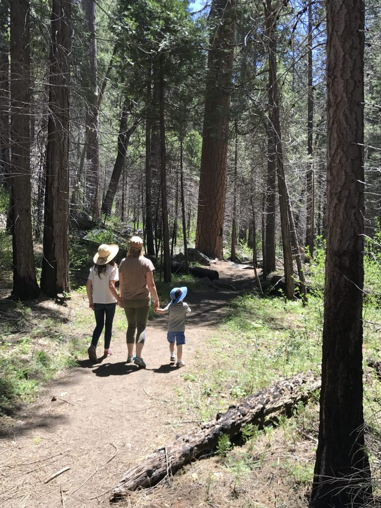 Hit the trail this summer for some exercise or try forest bathing for relaxation.