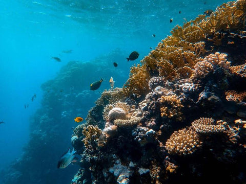 Protect the reefs by using mineral-based sunscreens.