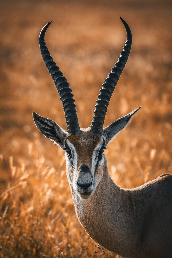 Antelope in Africa by Simon Markhof with Vallerret Photography Gloves