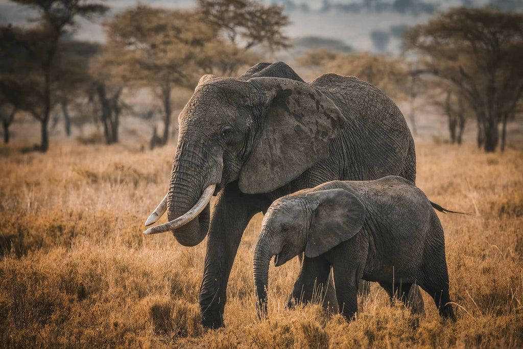 Elephants in Africa photo by Simon Markhof with Vallerret Photography Gloves