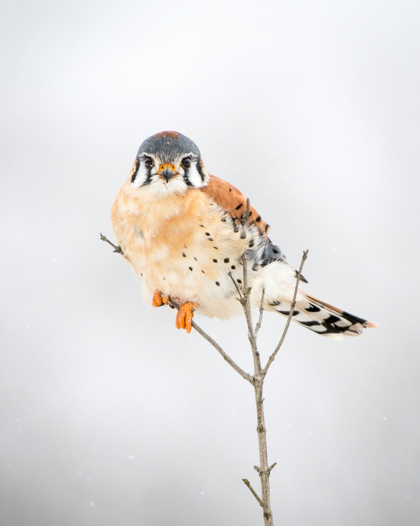 Small bird perched on a stick in the winter