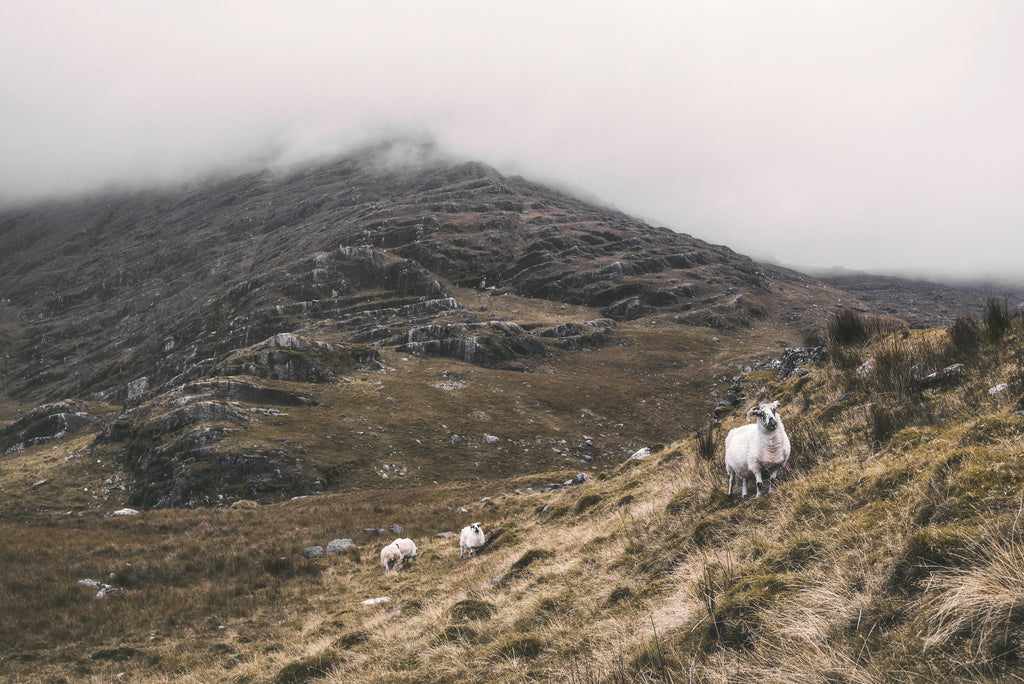 Sheep on a misty mountain