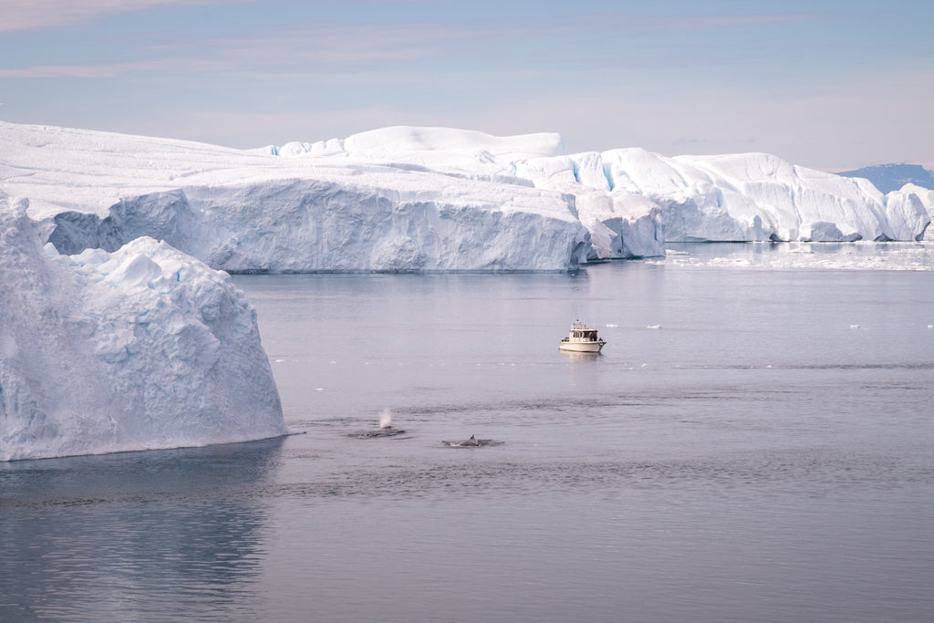 Whales-and-boat-tours-amongst-the-enormous-icebergs-Ilulissat-North-Greenland