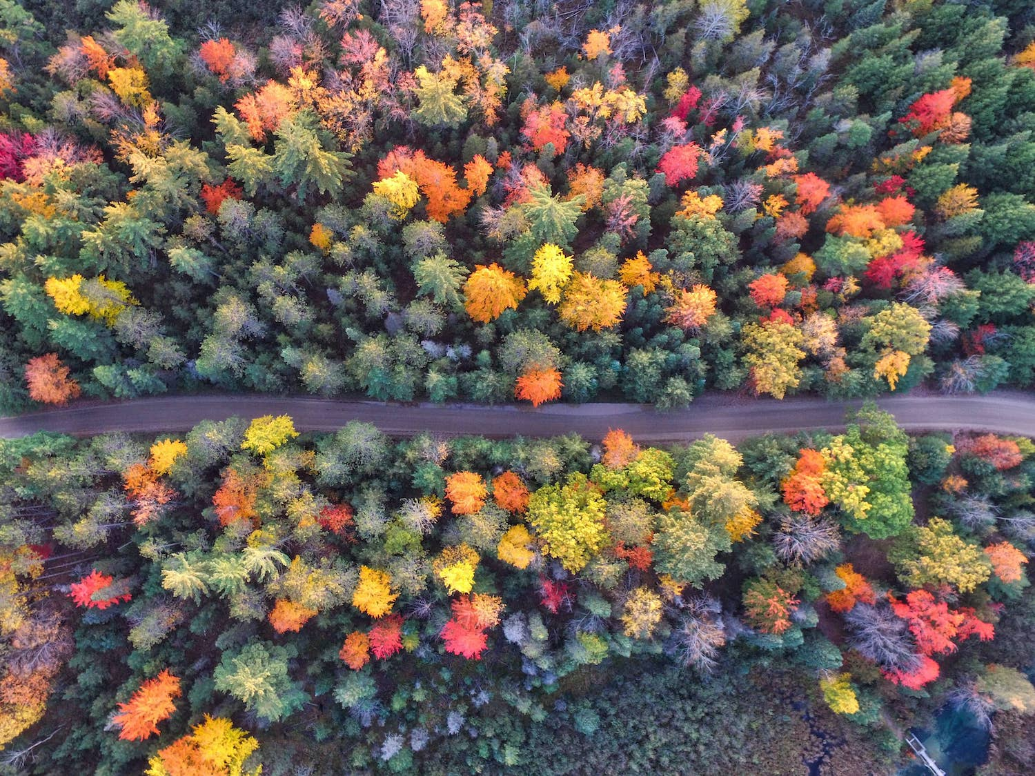 arial photo of autumn trees aaron burden