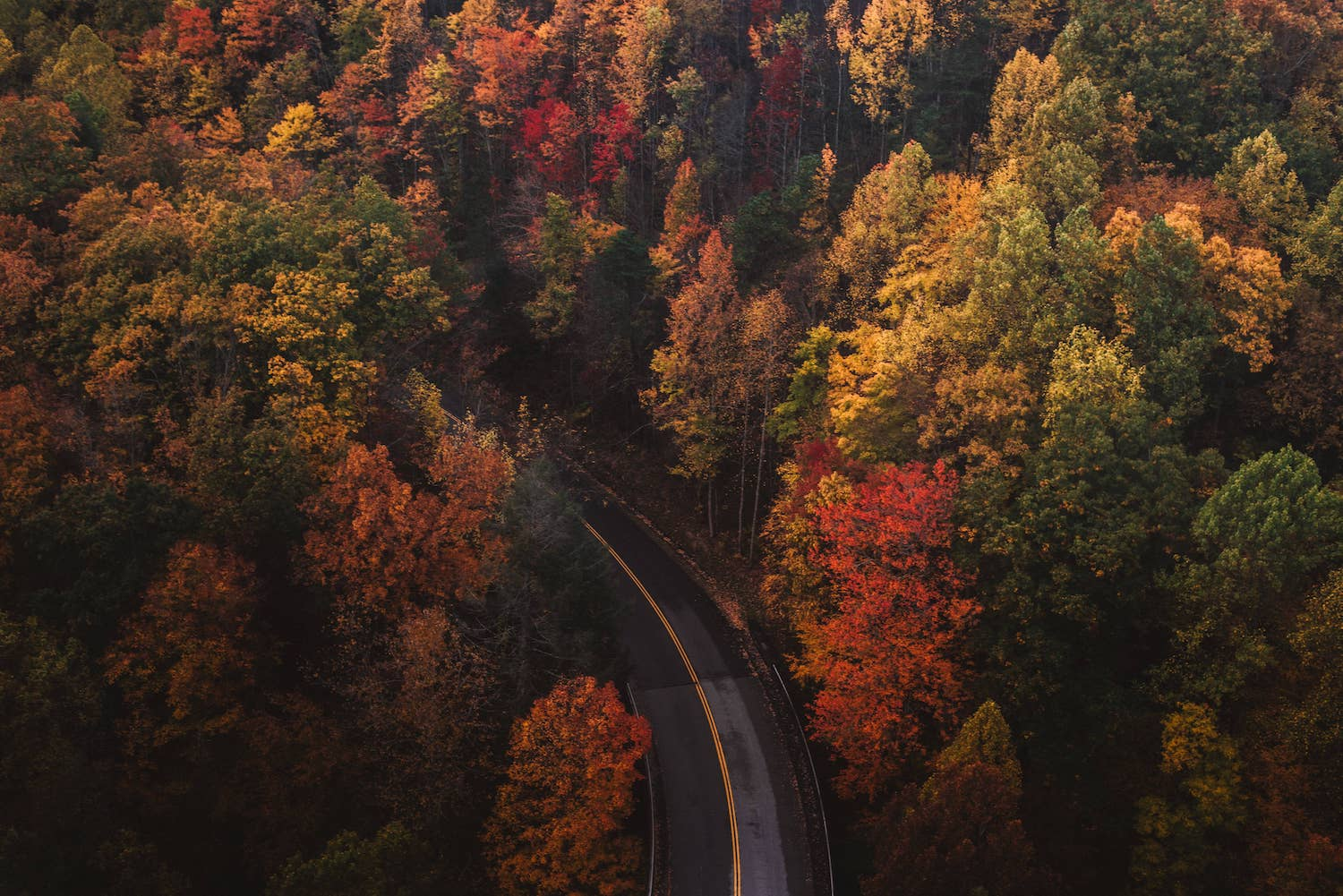 autumn colors with a road chad-madden-