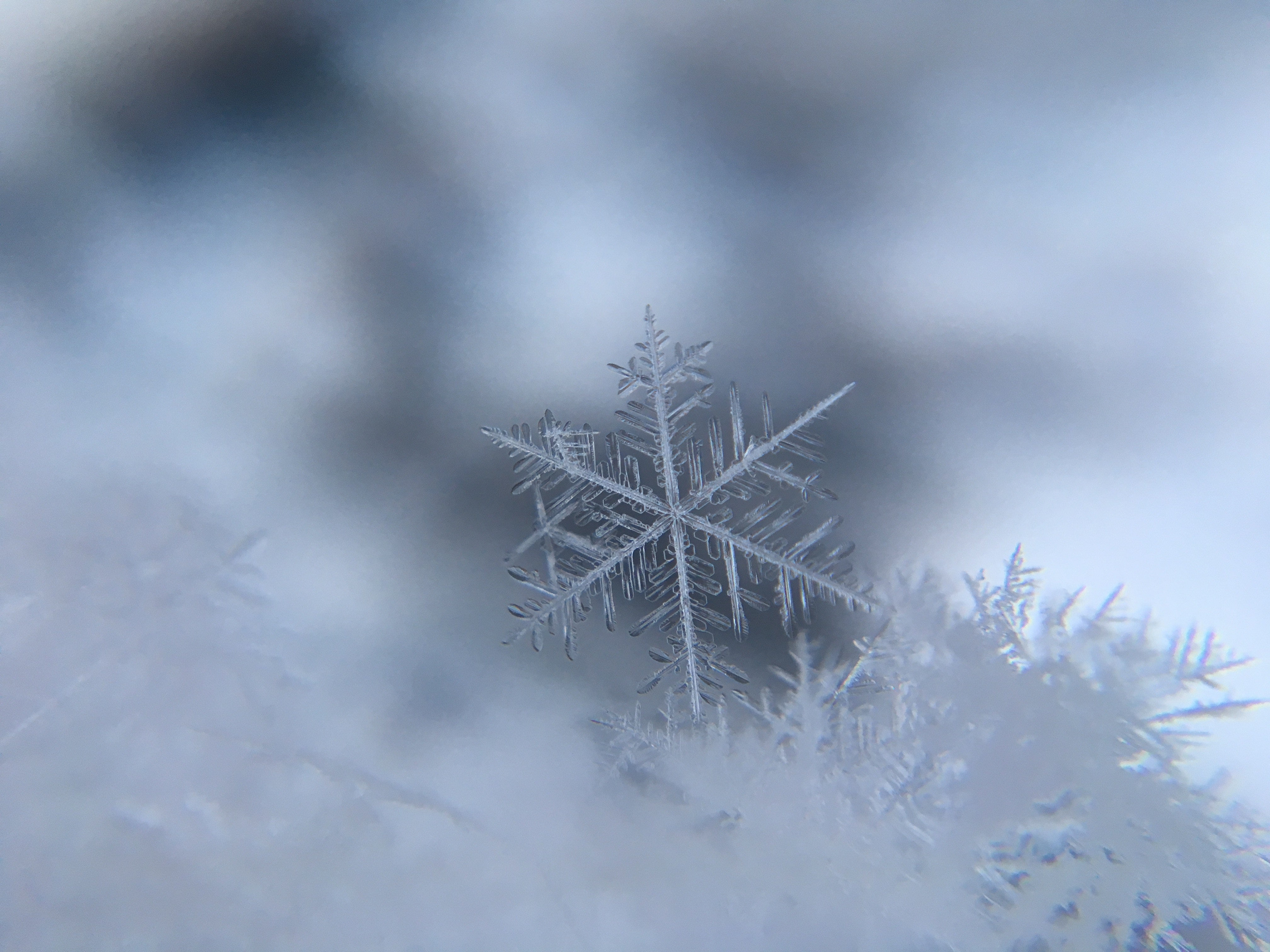 a tiny snowflake shown in great detail