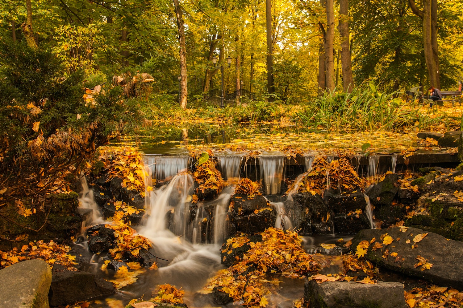 Autumn colours with a stream Dawid Zawiła