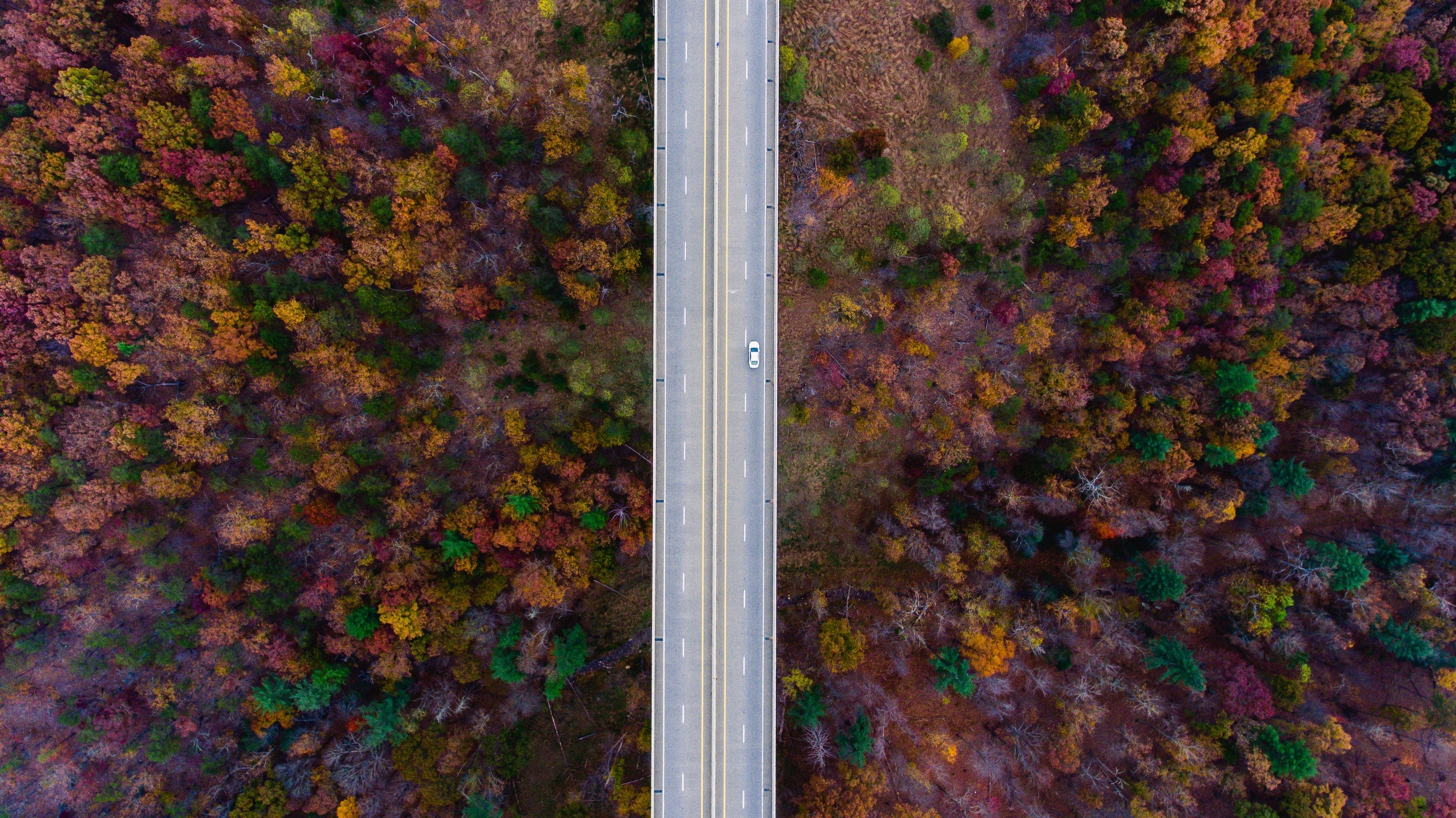 drone shot of autumn trees and street