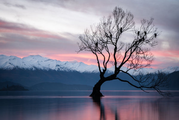 Wanaka Tree Winter Photography