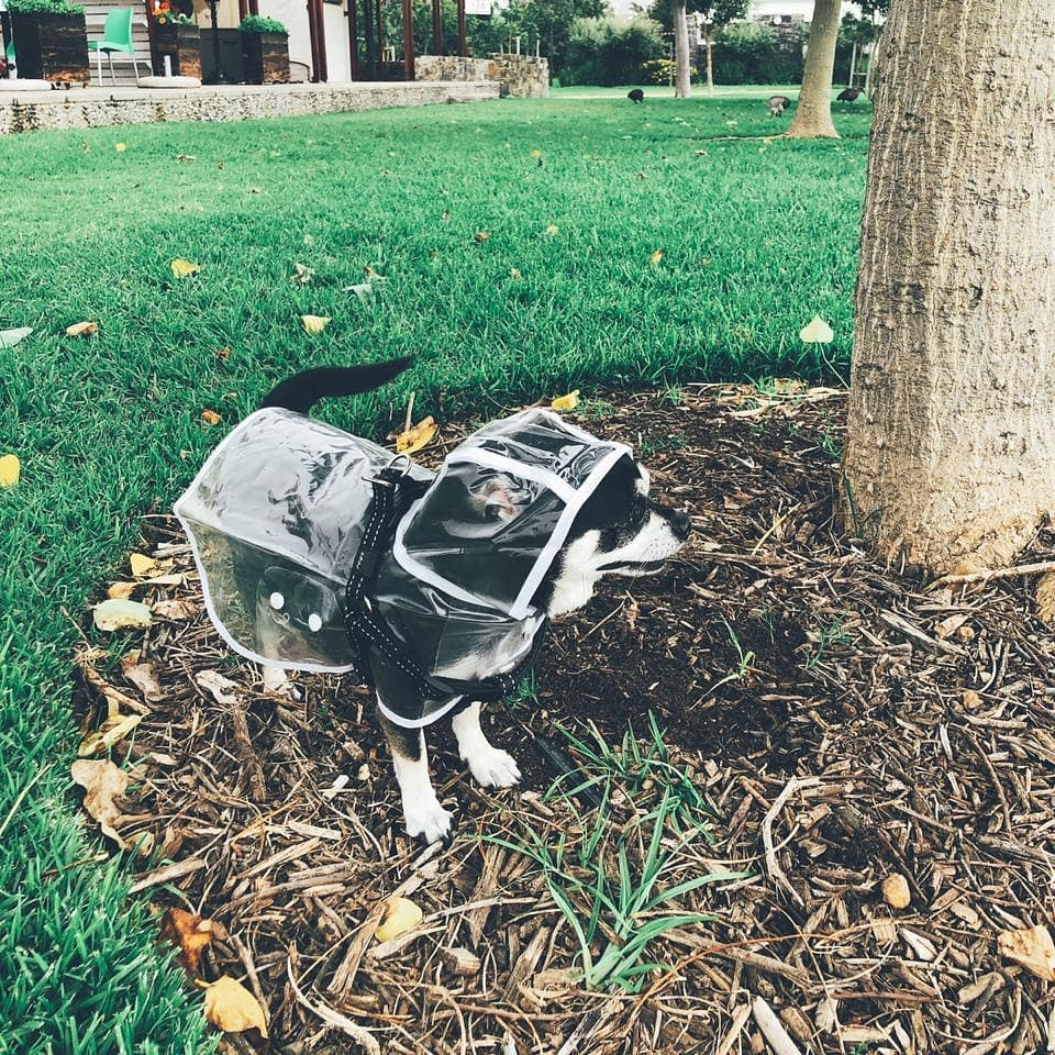 Outdoor Pet Raincoat
