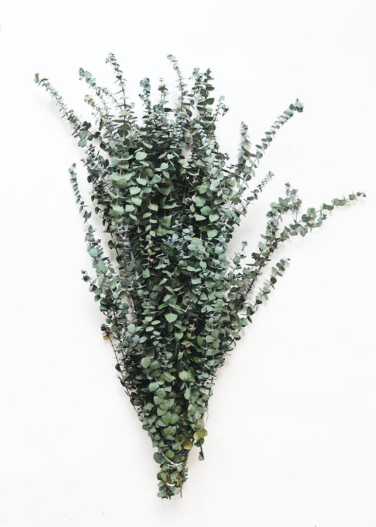Preserved Eucalyptus | Frosted Green