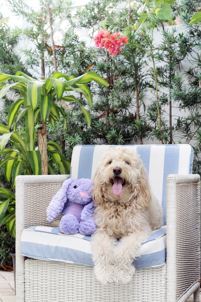6 Summer Fun Activities With Your Dog
