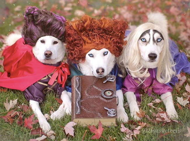 Halloween Safety Tips + Tricks for Dogs