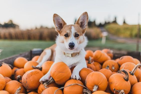 9 Dogs Who Love Fall As Much As We Do