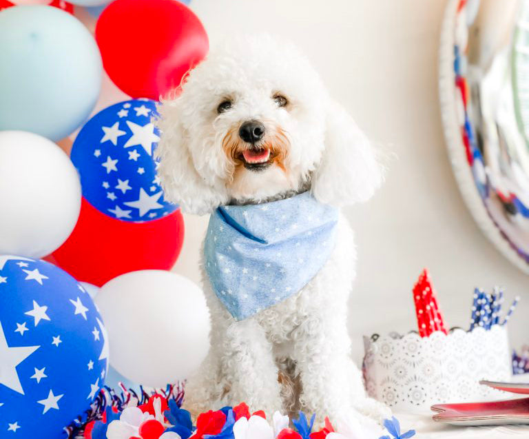 How to Throw a Themed Birthday Party for Your Dog