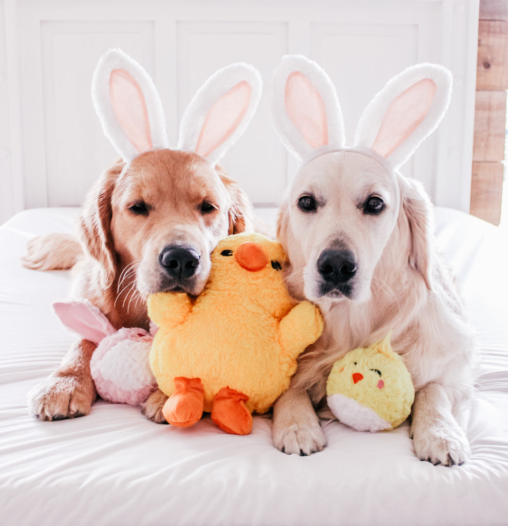 Last Minute Easter Gifts For Your Dog