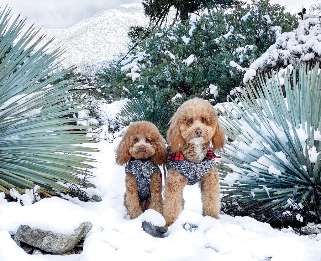 Meet The Pups Behind Our Holiday Brand Team