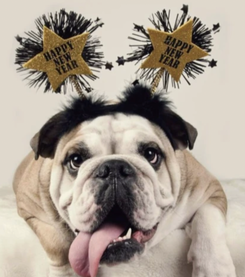 4 Dog Inspired New Years Resolutions We Can All Get Behind