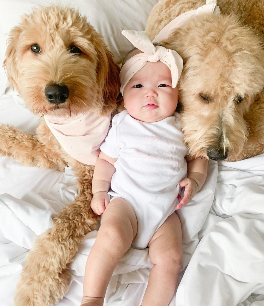 4 Things All Dog Mom's Need To Know Before Having A Baby