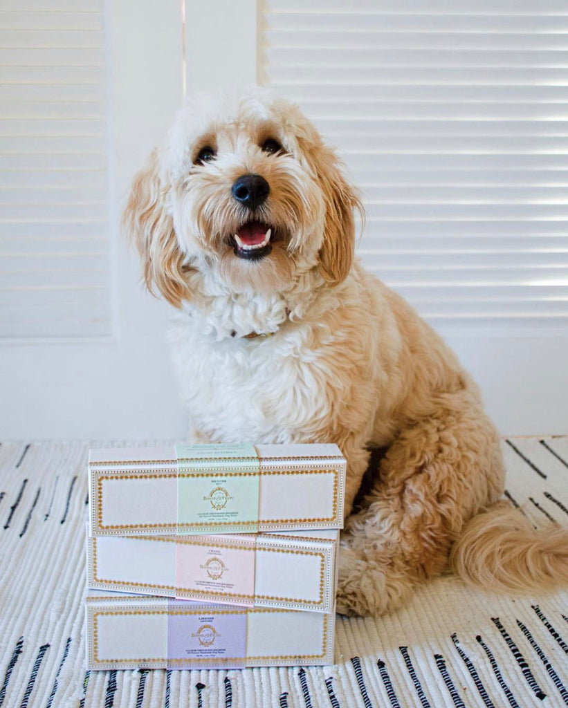 The Sweetest Easter and Spring Gift Guide for Dogs