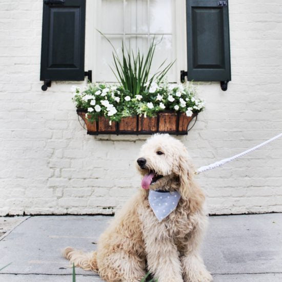 A Dog (& Human) Friendly Travel Guide to Charleston