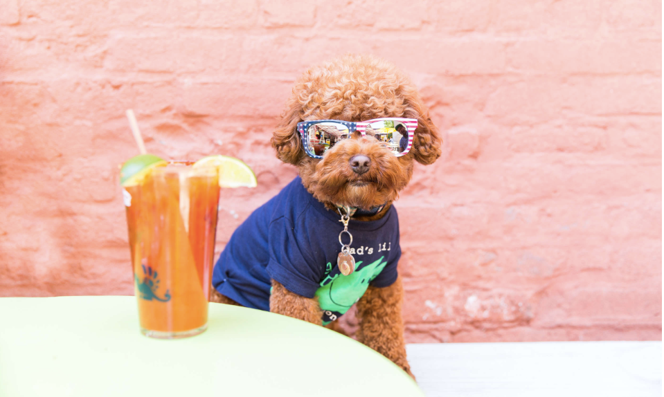 A Dog Friendly Travel Guide to New York City