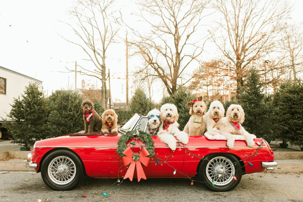holiday 2019 christmas and holiday gifts for goldendoodles and goldendoodle lovers patchwork pet dog blog