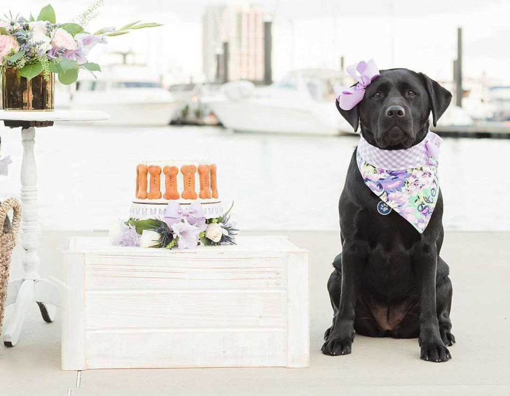 7 Easy Dog Birthday Cake Recipes