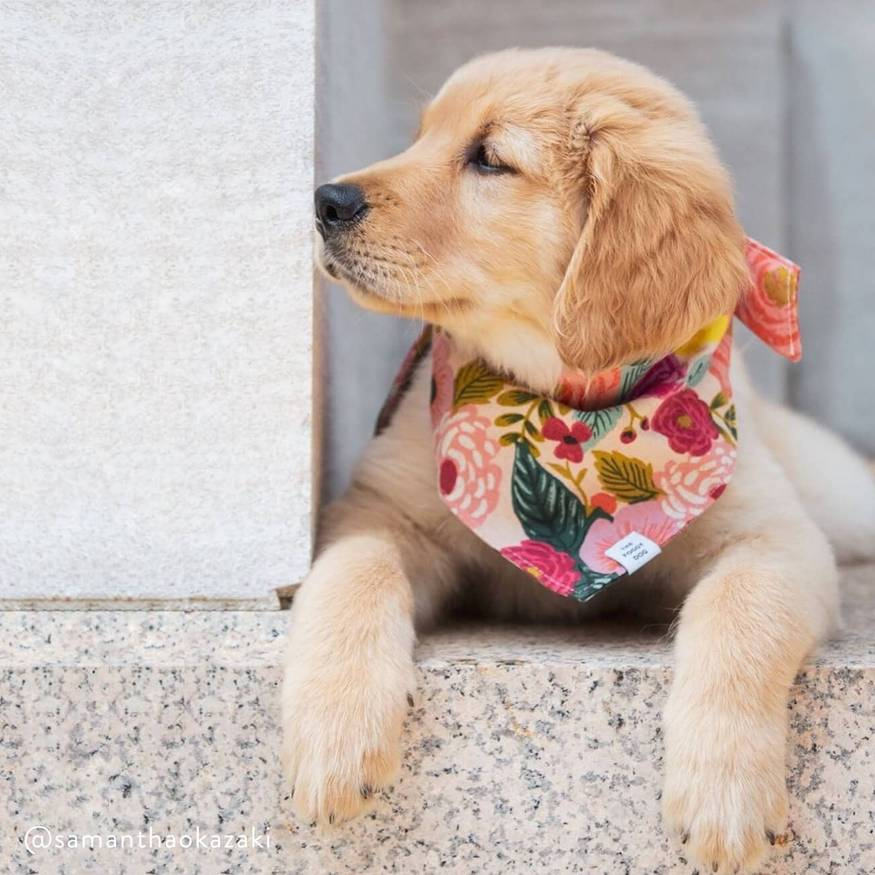 14 Instagram Dog Boutiques To Shop From + Support