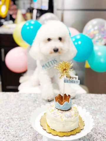 5 Examples of a DIY Dogs Birthday Party Mad pup life patchwork pet dog blog bobby and bambis dog bakery dog birthday cake