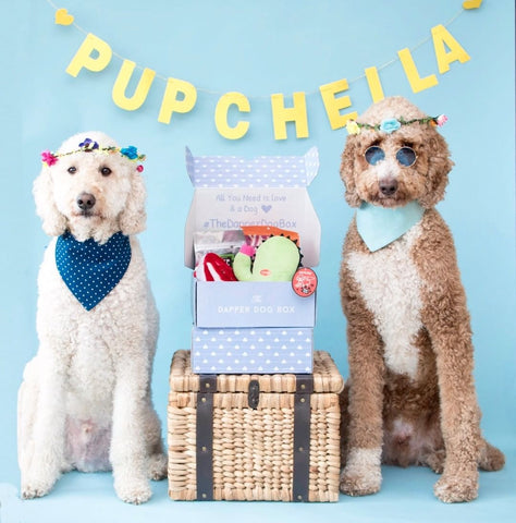 Best subscription boxes for dogs the dapper dog box coachella box